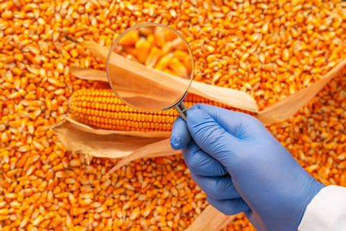 Estándares de calidad del maíz