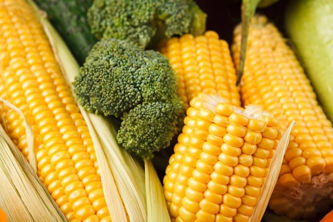🌽 El maíz considerado como el rey de los alimentos mexicanos