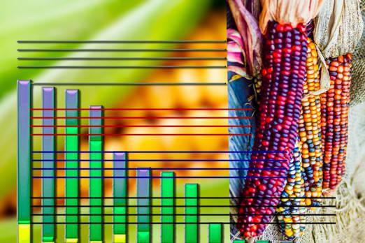 Estadísticas acerca del Maiz